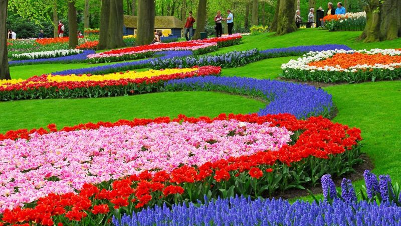 4482740-flower-garden-wallpapers