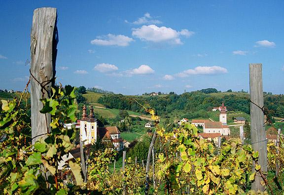povijest-vinogradarstva-u-slavoniji